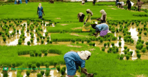Agricultural Project Monitoring and Evaluation (ARM 223)